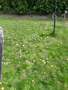 garden_isolating_rainbowbiz